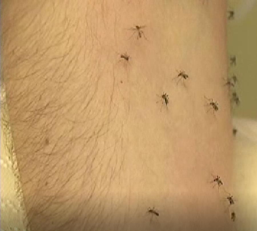Muggenbeet, Molton-muggenstop, molton kussensloop, antiallergisch kussensloop, healthguard, mosquito free kussensloop